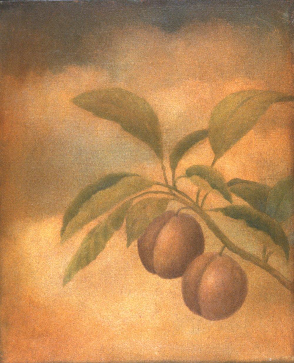 Fresco, Plum
