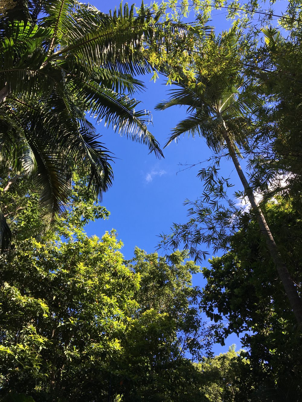 australia-brisbane-travel-southbank-promenade-3.JPG