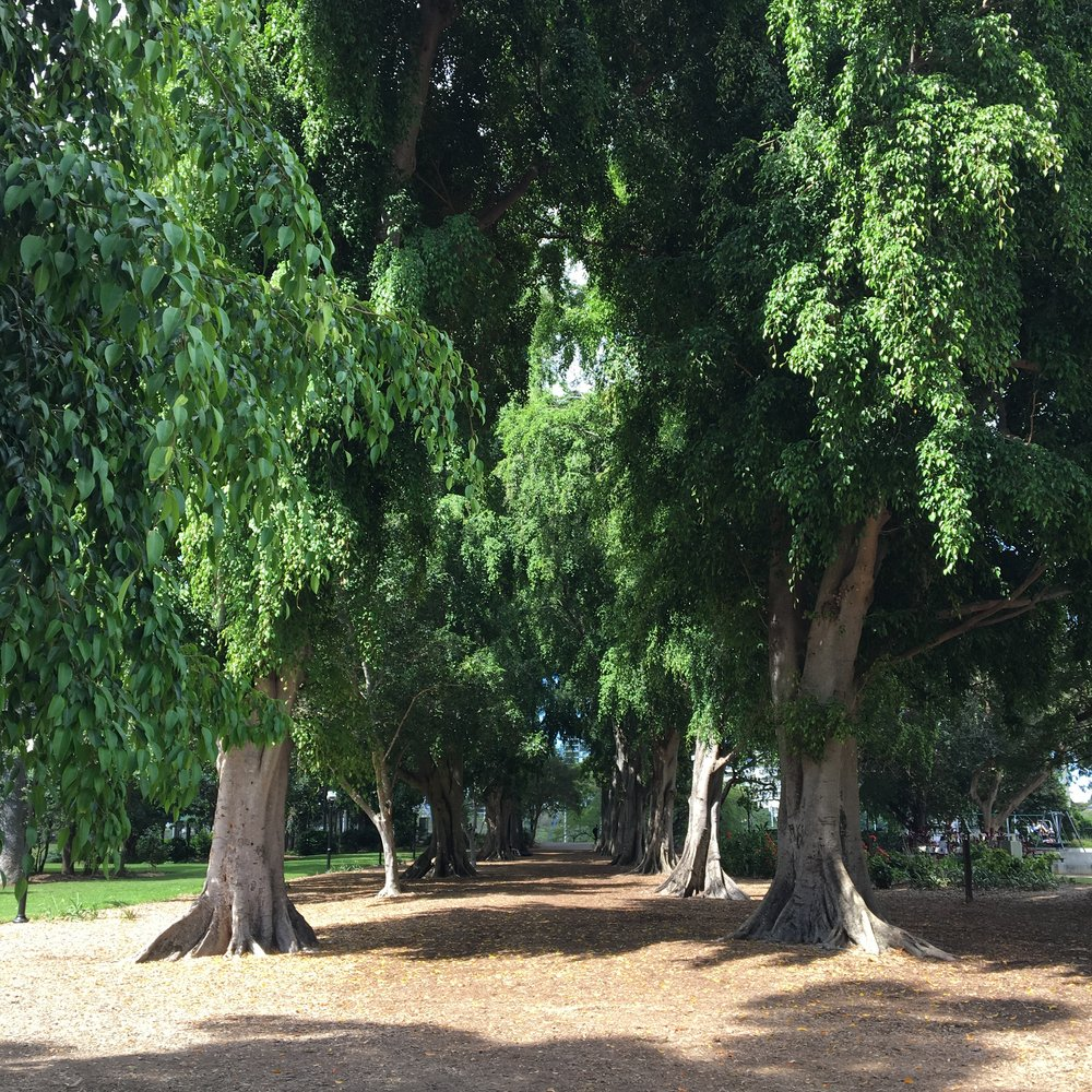 australia-brisbane-travel-botanic-garden-2.JPG