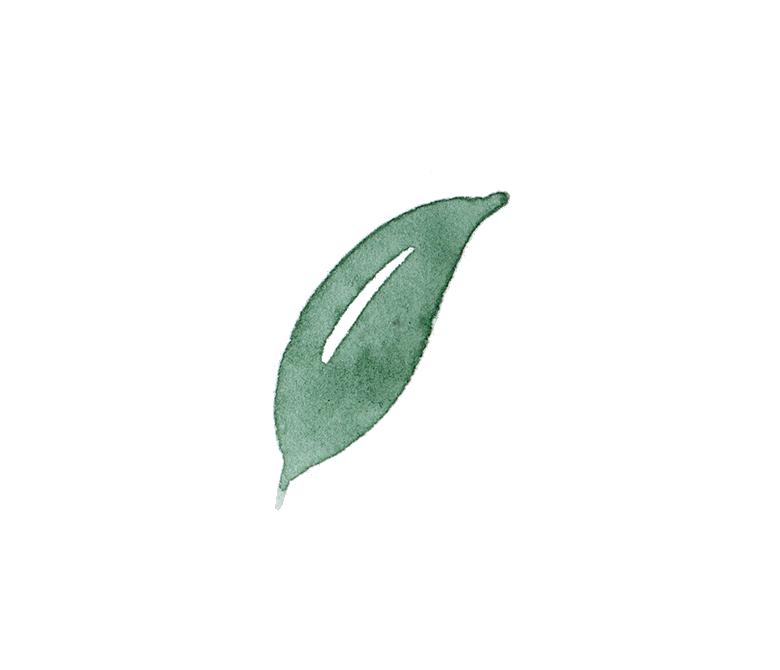Foliage 4.png