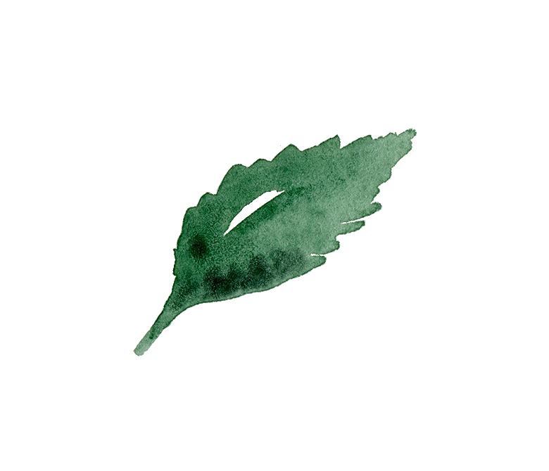 foliage 11.png
