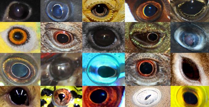 Slider_Eyes.jpg