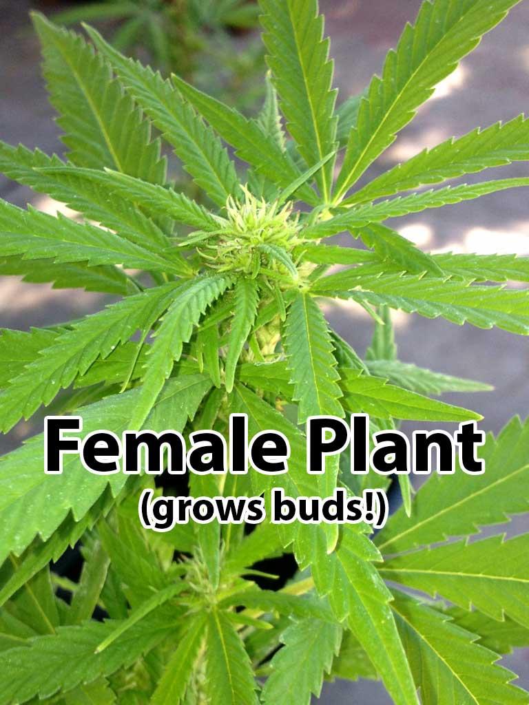 female-flowering-plant.jpg