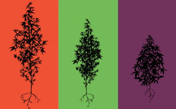 From Left to Right: Sativa, Hybrid, Indica