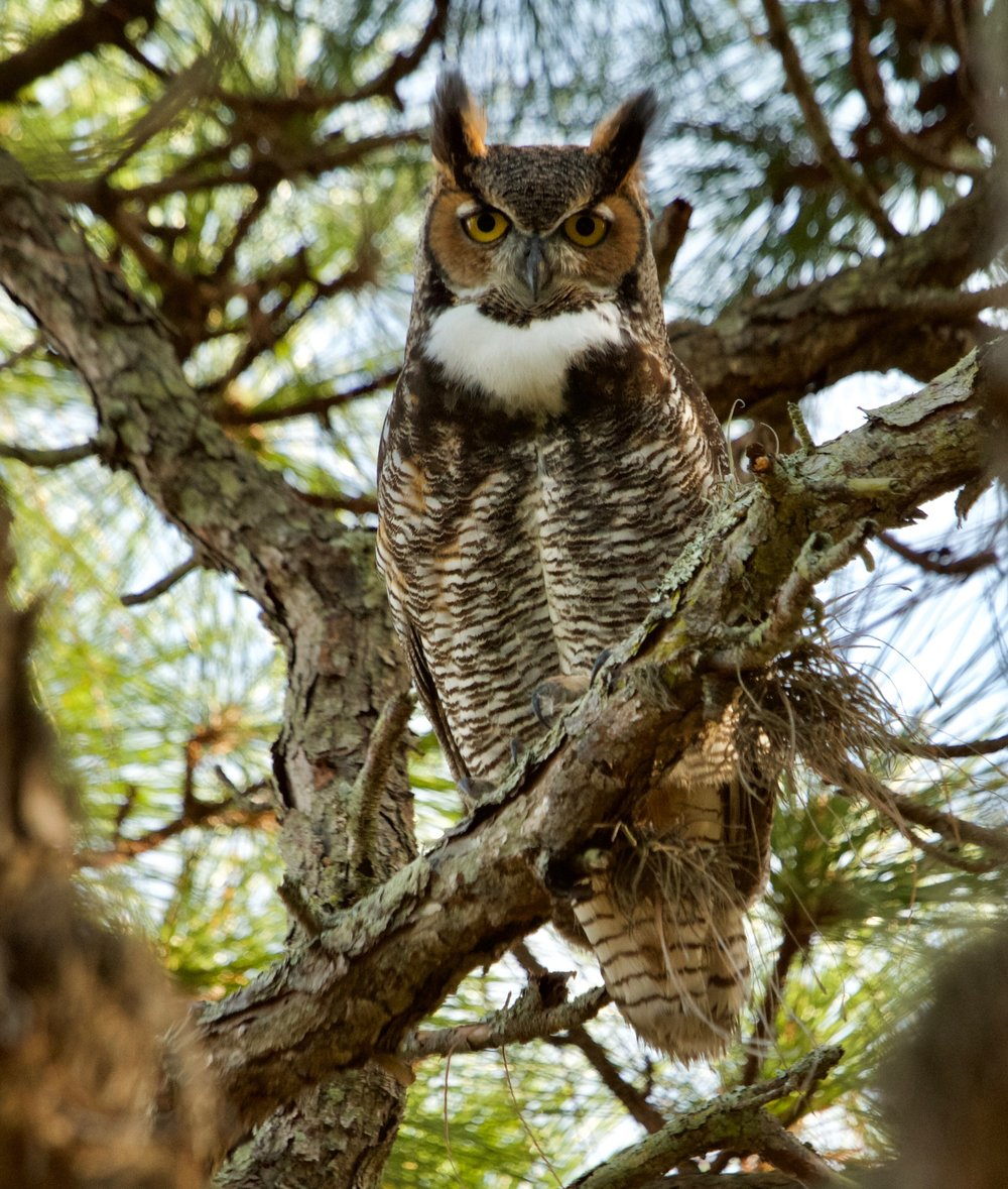 A. I see an owl. So cute!B. Why is the tree allowing the owl to sit on it?C. How thick is the tree bark?D. What biome do these organisms live in? -
