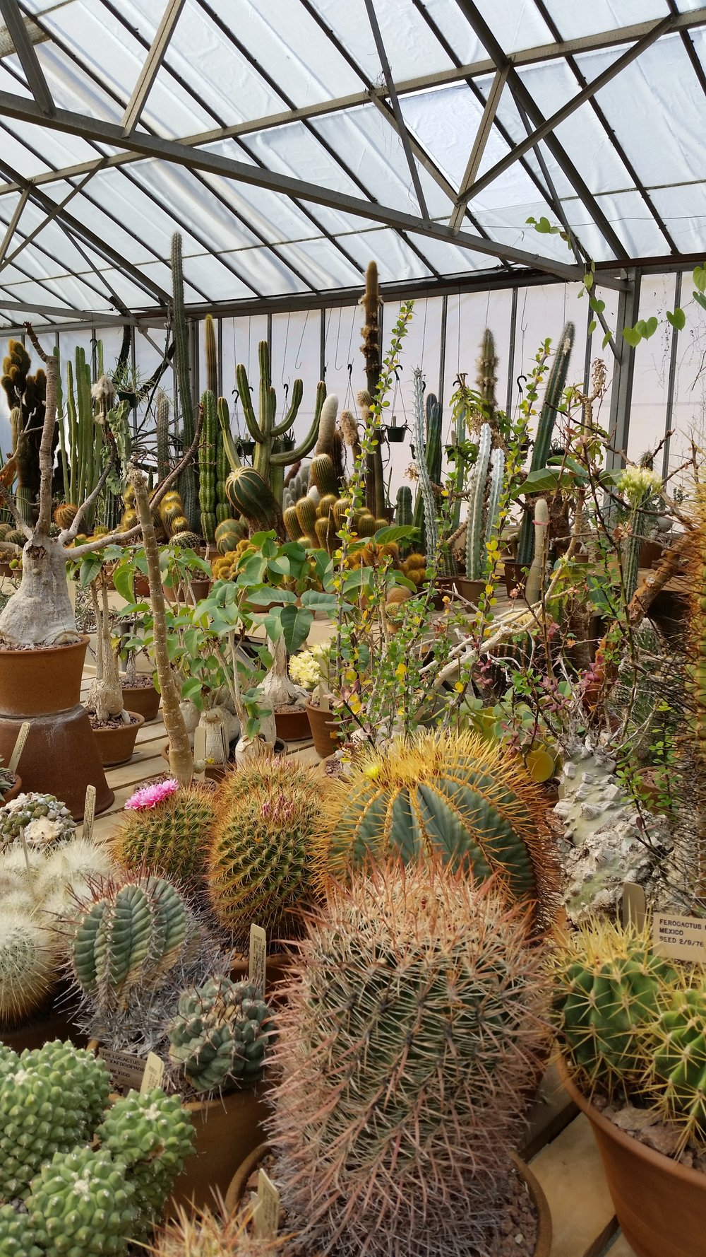 """Huntington Library, Art Collections, and Botanical Gardens.Los Angeles.""""…spectacular gardens spread across 120 acres"""".This is a learning lab and Plants Go Global inspiration for me as a Huntington Reader/researcher. -"""