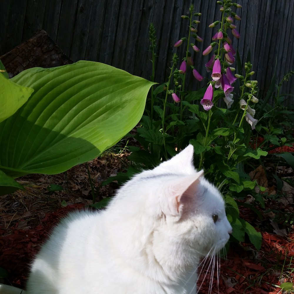 Cats may rule the Internet,but plants support them and all other animals.Cats and dogs eat animals that eat plants.There's that food chain with plants as the base.And wild animals make plants their habitat. -