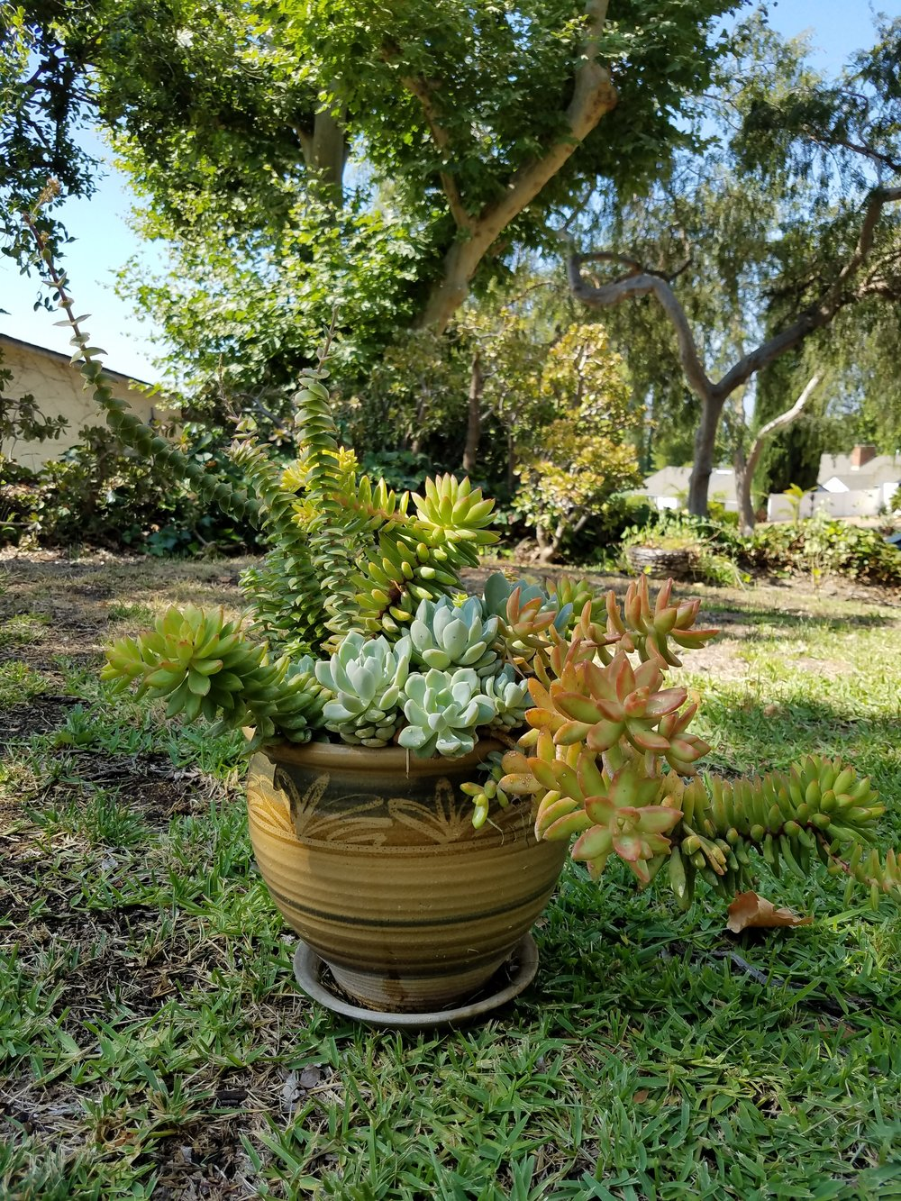 There's so many ways to grow plantsand so many plants to grow: FlowersSucculentsShade loversPollinator friendlyFarmingLandscapingSchool Gardens -