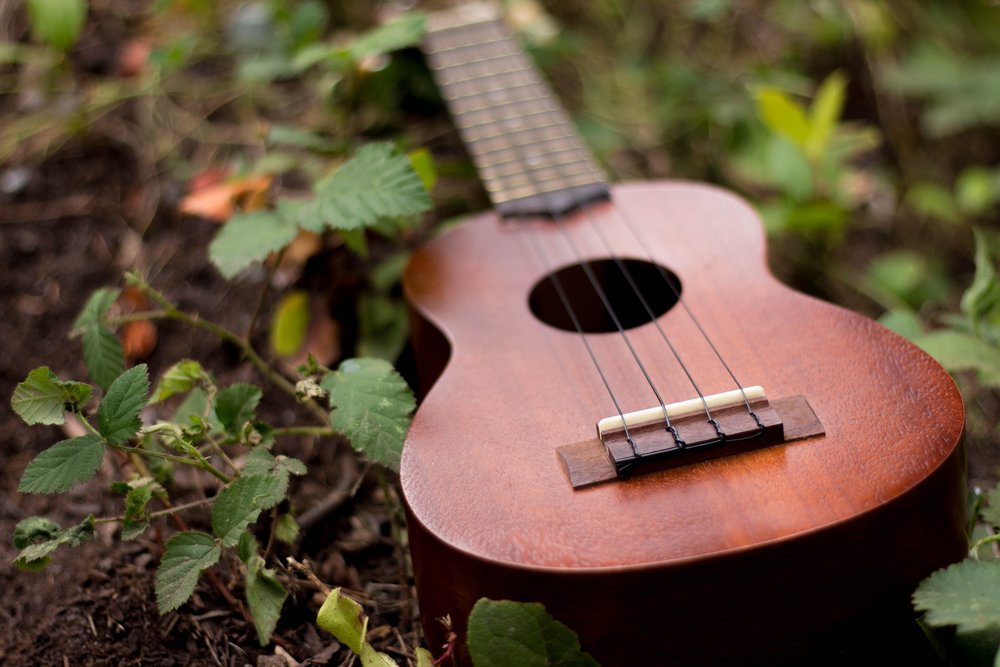 Many musical instruments are made from plants.CalabashCorkGourdsLianas -