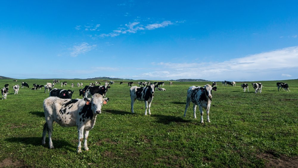Free Range animals forageon grasses and low lying plants called forbs.Yet overgrazed land can be a problem for plants and soil.Plants can't grow fast enough to regenerate; soil gets too compacted for plant growth. -