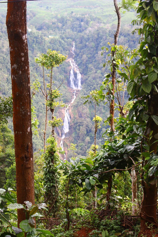 cascade-wayanad-inde-du-sud.jpg
