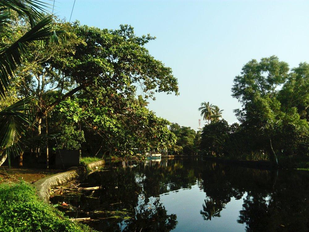 backwaters-marari-beach-kerala