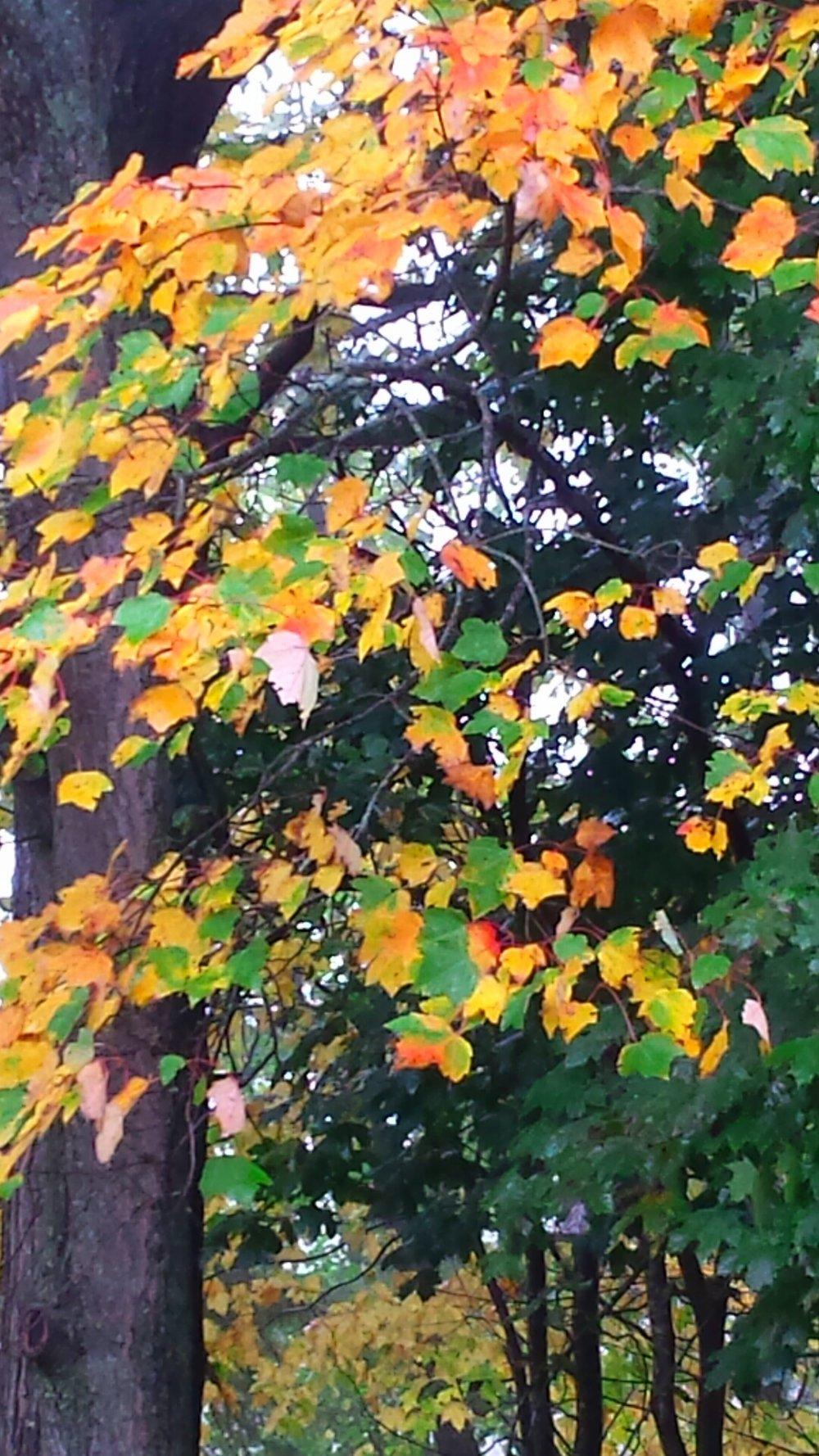 fall foliage.png