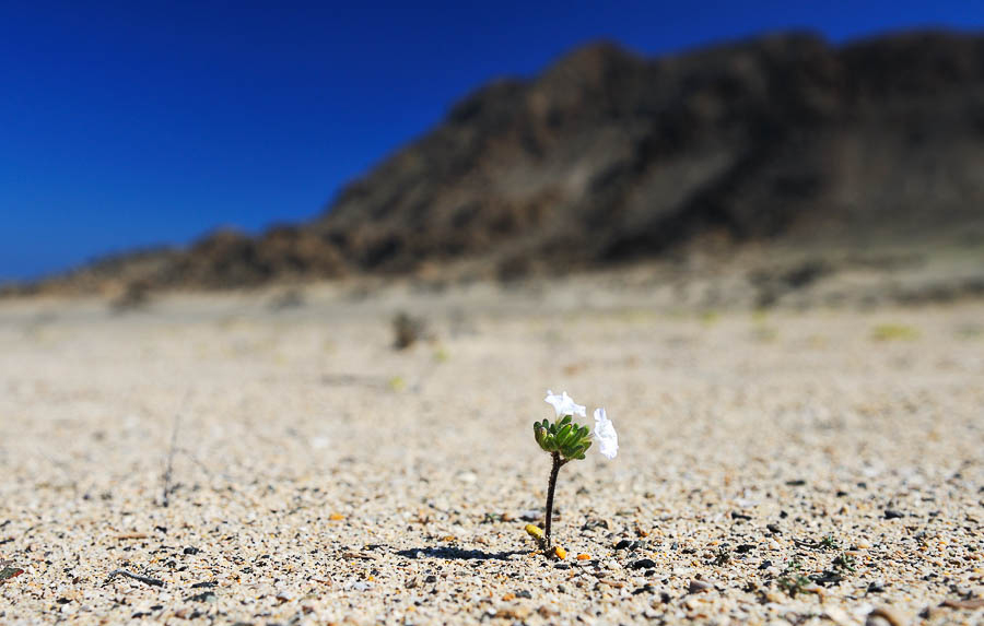 last flower.jpg
