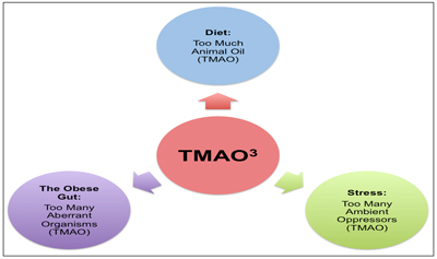 Proposed Contributions to Blood TMAO Concentration by Diet, the Gut and Stress