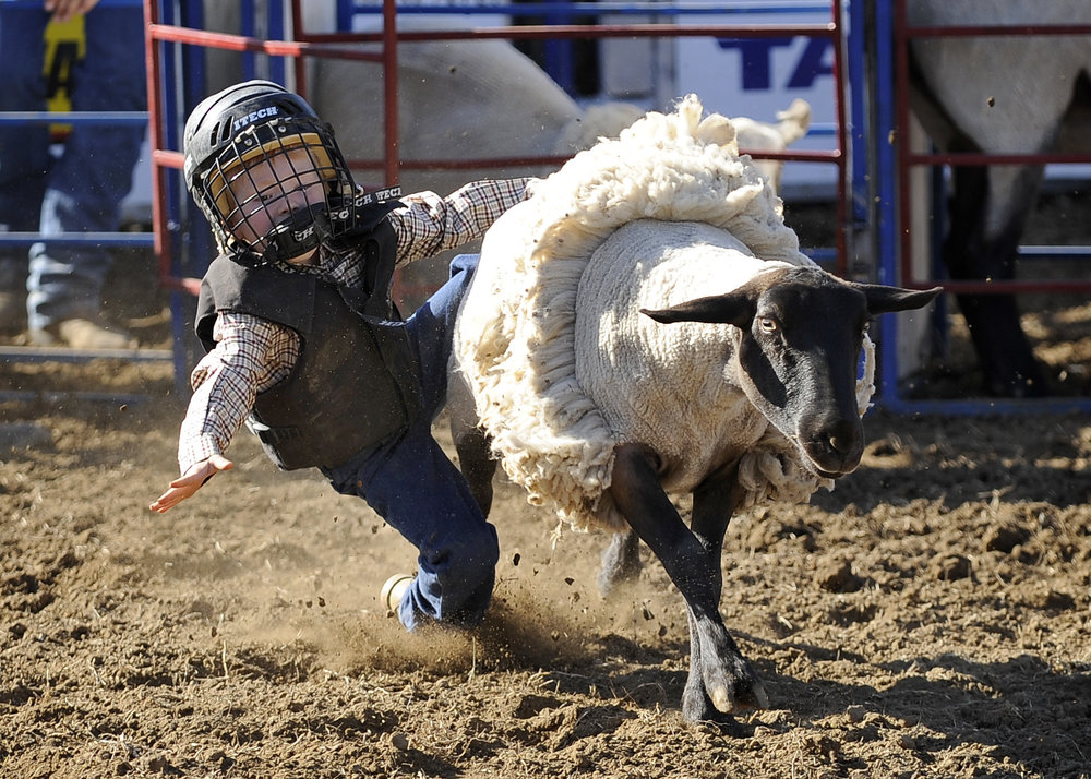 Mutton bustin' - You must pre-register to participate