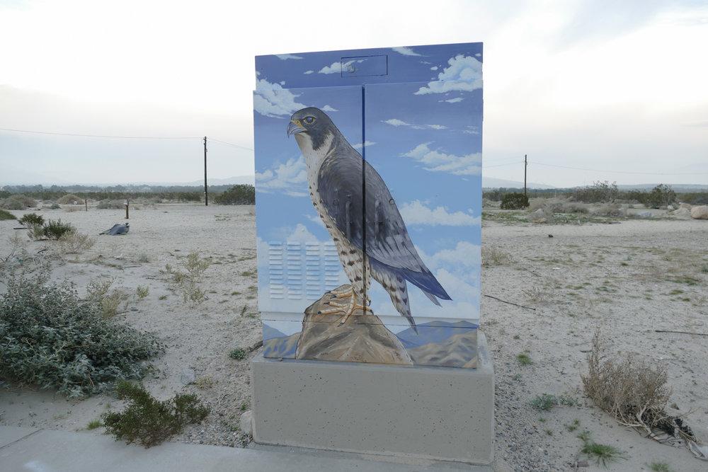 falcon box-1050194.jpg