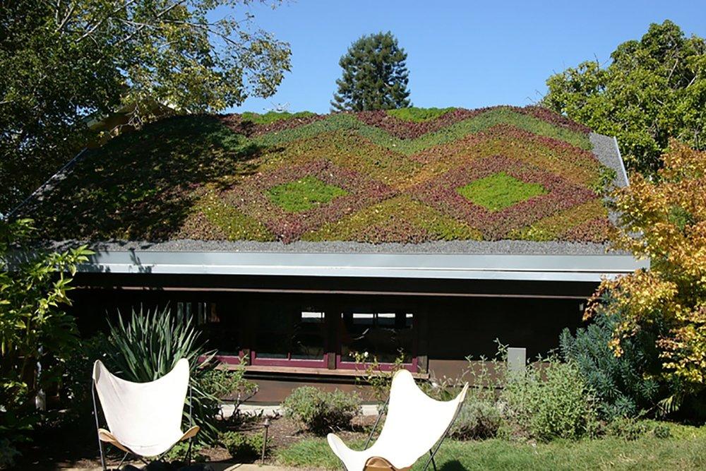 Green-Garden-Roof-Berkeley-California-Studio-Geiger-Architecture-Princeton-&-NYC.jpg