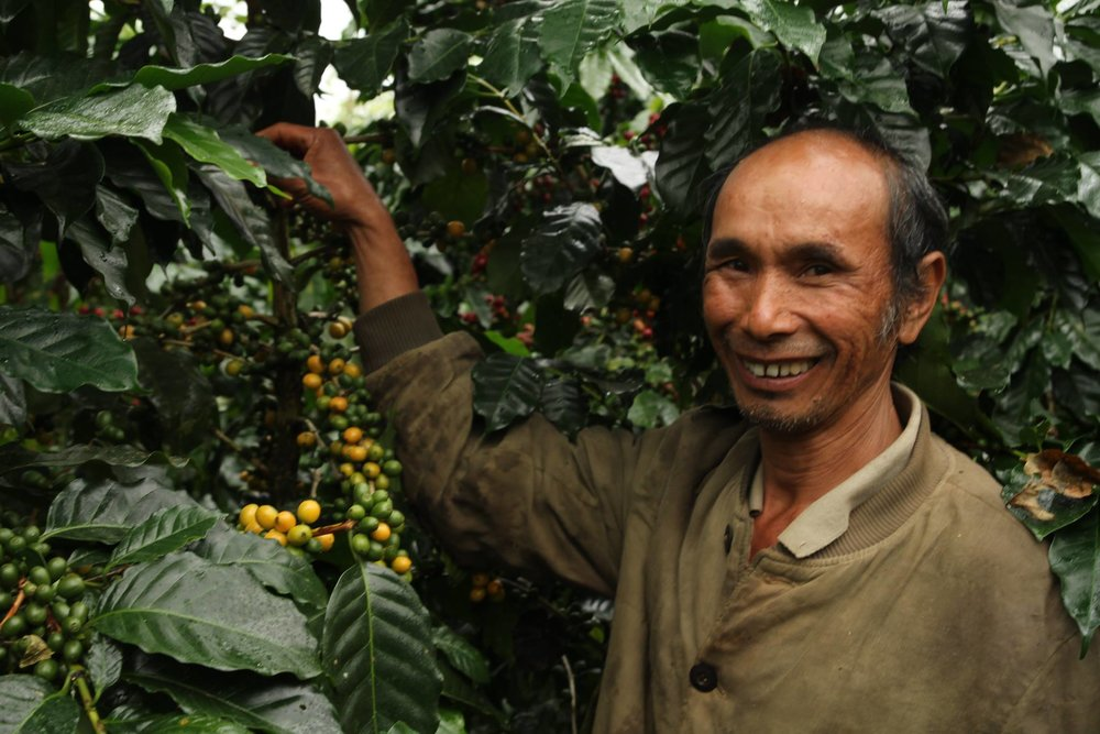 Mr. Vy, Houaytoey Village standing with his unidentified yellow Arabica variety. This coffee cupped beyond 90 points and you would be forgiven if you mistook this coffee for a Panamanian Gesha.