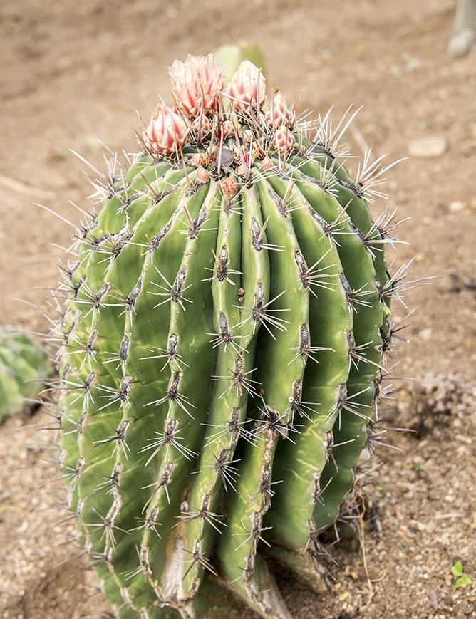 Cactus garden (3).jpg
