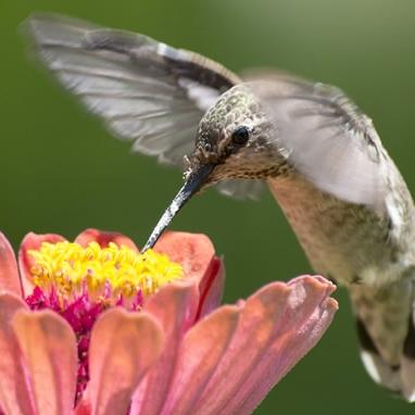7_hummingbird.jpg