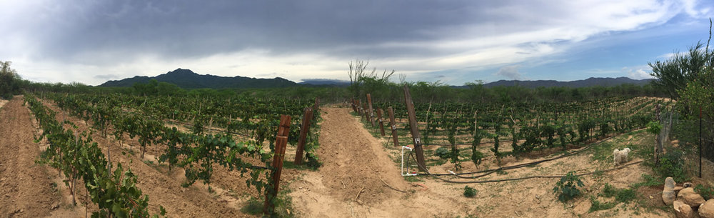 11-Vineyards_Pano.jpg