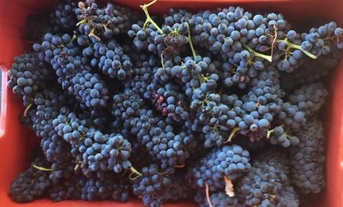 4-grapes.jpg