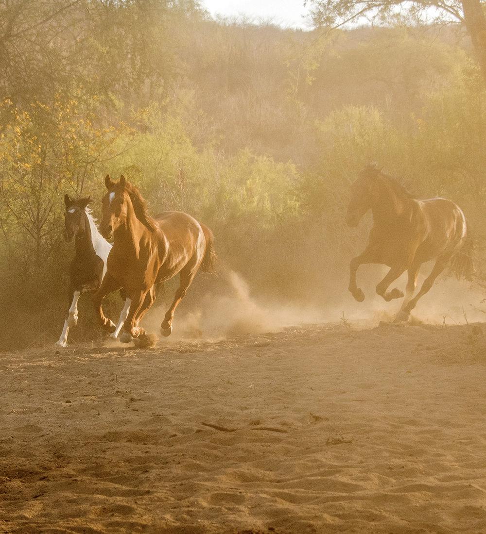 10_horses.jpg