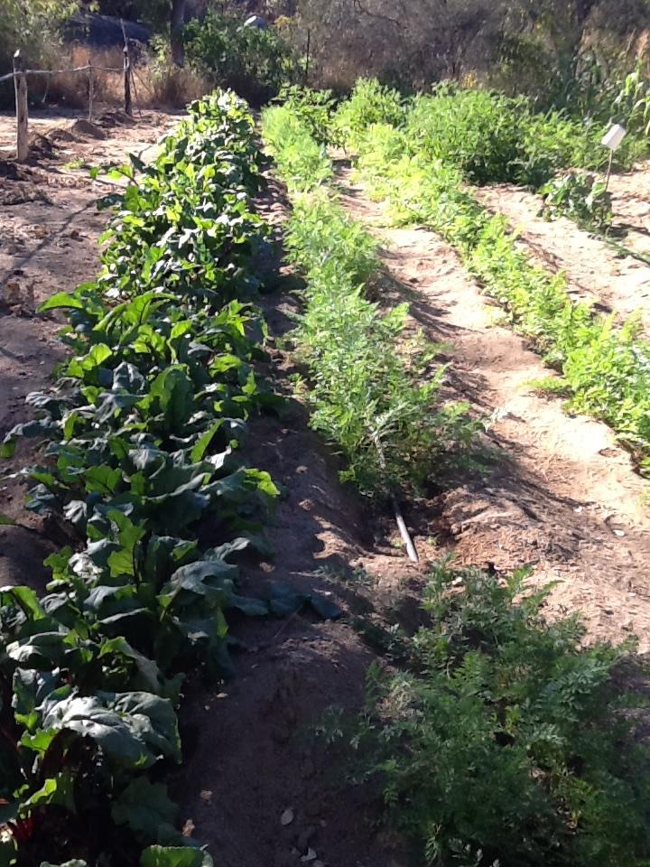 12-farm.jpg