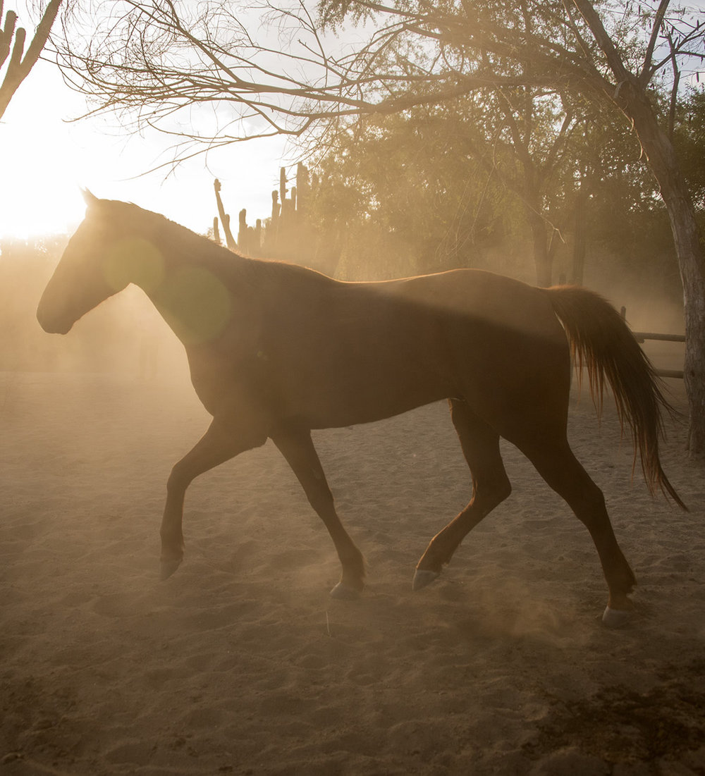 11_horse.jpg