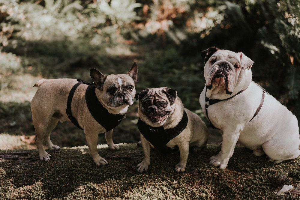 Henry-Tieu-Photography-Henrysdiary-PNW-Adventure-Elopement-Wedding-Seattle-Portland-California-Oahu-2.jpg
