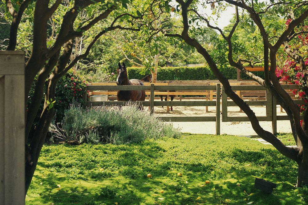 ranch01.jpg