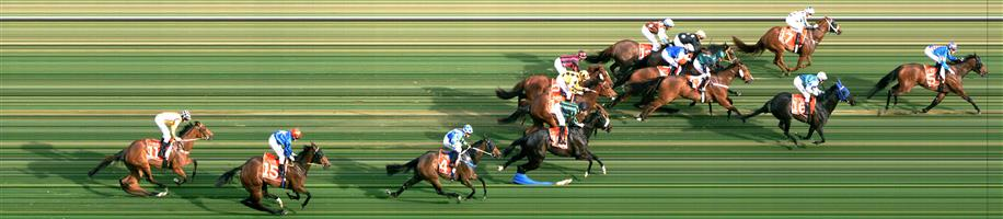 Morphettville Race 8 No.14 Sworn Evidence @ $5 (1.25 UNITS WIN)   Result : Unplaced at SP $7.00. Drifted slightly and ran accordingly to finish around midfield. Outcome -1.25 Units.
