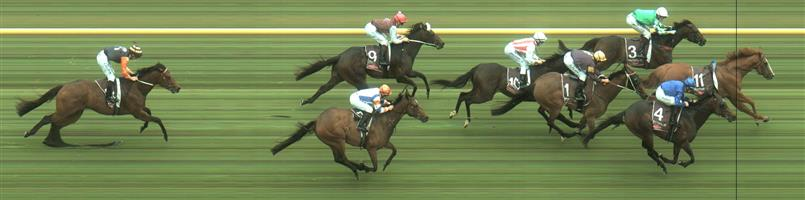Caulfield Race 2 No.6 Ringerdingding @ $7 (0.84 UNIT WIN)   Result : Unplaced at SP $6.00. From the turn, ridden hard though couldn't cut into the margin and finished towards the tail. Outcome -0.84 Units.