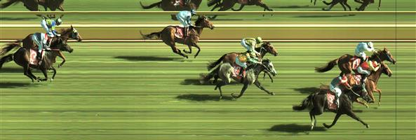 Sale Race 8 No.8 Donndubhan @ $13 *** watch price ***   Result : Non Qualifier – 3rd at SP $31.00