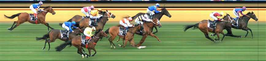 Flemington Race 4 No.7 Gallic Chieftain @ $16 (price unlikely)   Result : Non Qualifier - 4th at SP $16.00  Flemington Race 4 No.12 Yogi @ $11 (watch price)   Result : Non Qualifier - Unplaced at SP $12.00