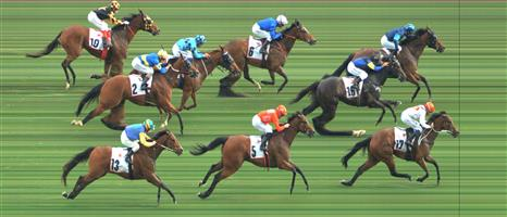 Flemington Race 9 No.7 Snitzkraft @ $9, watch price   Result : Non Qualifier - Unplaced at SP $15.00