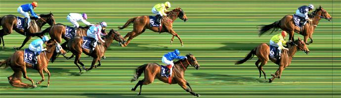 Flemington Race 9 No.16 Dennis @ $31 - not out of if by any means, in an open race.   Result : Non Qualifier - Unplaced at SP $31.00