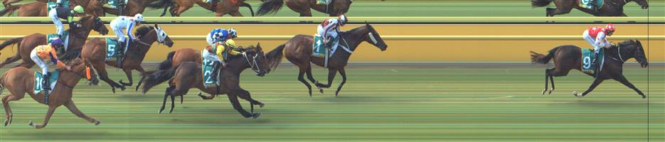 Ararat Race 7 No.13 Sea Of Stars @ $9 - watch price (lower with some bookies)   Result : Non Qualifier – 3rd at SP $10.00