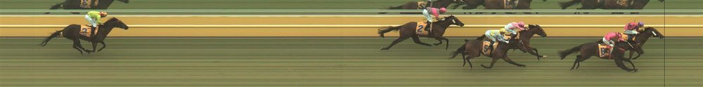 Warrnambool Race 1 No.6 Wild Moon @ $1.65 (1.50 UNITS WIN)   Result: 2nd  at SP $1.45. Despite sitting right behind and getting a nice cart into the race by Astrobite, Wild Moon took too long in the straight to get going and get past Astrobite. Outcome -1.50 Units.