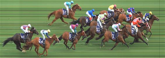 Flemington Race 9 No.12 Twitchy Frank @ $5.50 (1.12 UNITS WIN)   Result: 4th  at SP $5.50. Up near the lead for the majority of the race until swamped late to finish just out of the placings. Outcome -1.12 Units.