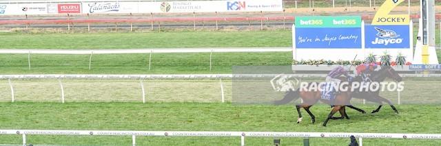 Bendigo Race 8 No.4 Blanco Cara @ $7 (0.84 UNITS WIN)   Result : Non Qualifier - Unplaced at SP $13.00  Bendigo Race 8 No.7 Sarkozy @ $9 - watch price   Result : Non Qualifier - 3rd at SP $12.00