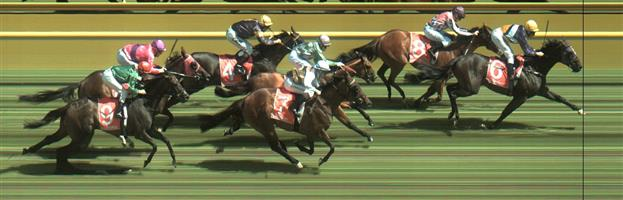 CAULFIELD Race 6 No. 7 Fastnet Latina @ $9.50 - watch price   Result : Non Qualifier – 4th at SP $9.50