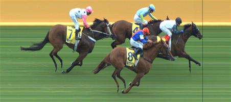 Sandown Race 5 No.3 Cash Affair @ $2.50 (1.5 UNITS WIN)   Result : Unplaced at SP $2.80. Settled midfield and struggled from about 300m from home and finished a long last. Outcome -1.50 Units.  Sandown Race 5 No.8 Mosh Music @ $2.80 (1.5 UNITS WIN)   Result : 3rd at SP 2.35. Settled at the back in the five horse field. Widest on the turn and really hit the line well to miss by about half a length. Outcome -1.50 Units.  NB: Suggest use a bet-boost on each of these runners if possible