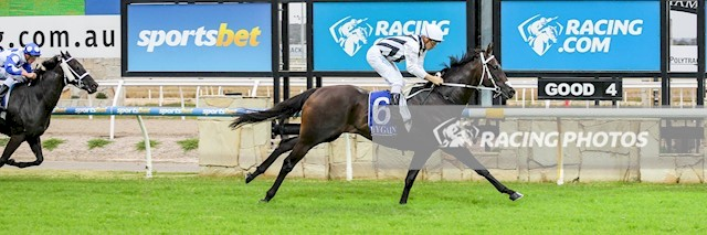 Pakenham Race 3 No.8 Wishful Realizer @ $10 - watch price   Result: 3rd  at SP $5.50. After sitting behind the speed, got into a little bumping jewel with the winner, No Drama Darci (SP $1.80) at the 400m mark, Wishful Realizer came off second best and finished about three lengths off the winner. Outcome -0.83 Units.