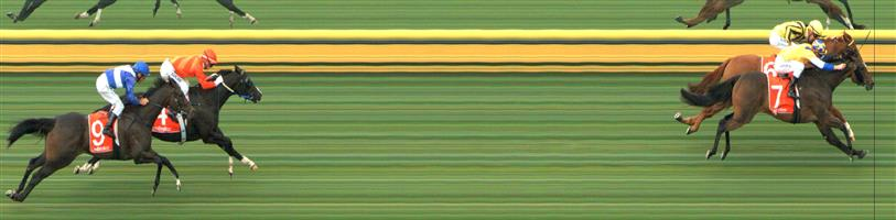 SANDOWN HILLSIDE Race 1 No. 6 Convict Sam @ $3.20 (1.5 UNITS WIN)   Result: 2nd  at SP $4.20. In the field of five, came from the back as was hard ridden 600m out. Saved ground on the turn and went for inside runs. In the final 100m or so it was a battle between Convict Sam and Smiling City (SP $2.40) and on the line Smiling City head was down, Convict Sam head was up. Outcome -1.50 Units.