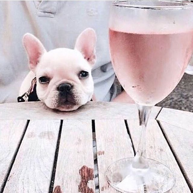 It's the weekend now right? . It was a busy week here at the studio! From meeting new brides to sample dress fittings to gowns getting picked up, we've had an eventful week! . Now it's time for a glass of rosé! Hooray!