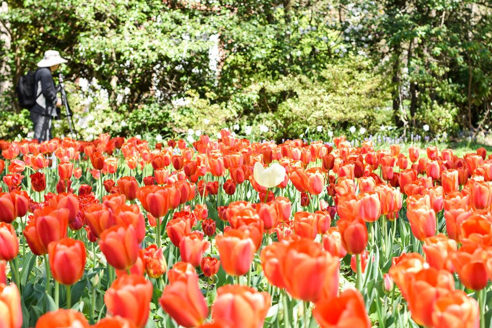 Sherwood-Gardens-11.jpg