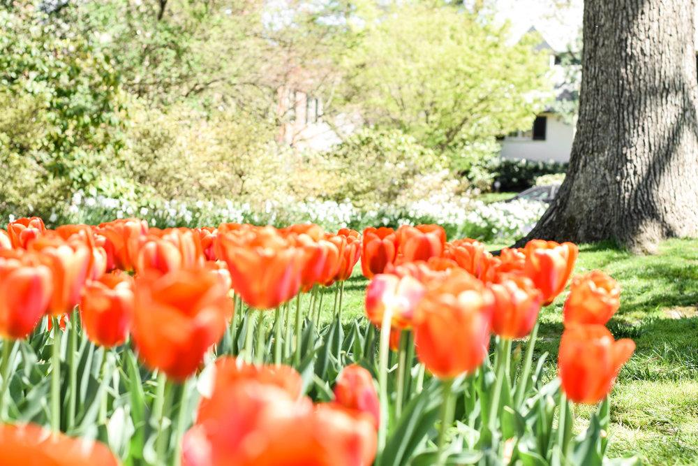 Sherwood-Gardens-13.jpg