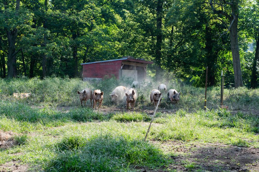 Turner Farm-9.jpg